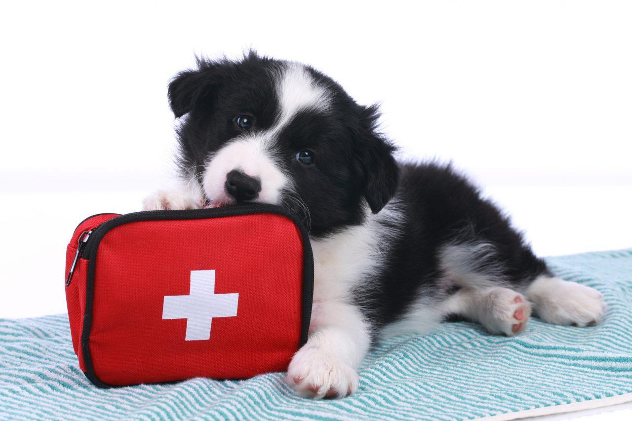 Trousse de premiers soins pour chiens chats